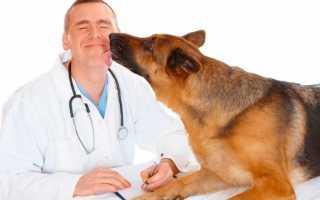 Сколько зарабатывает ветеринар: в России, в мире