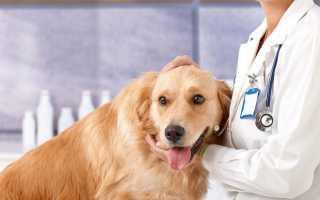 Профессия ветеринара — плюсы и минусы, зарплата в России